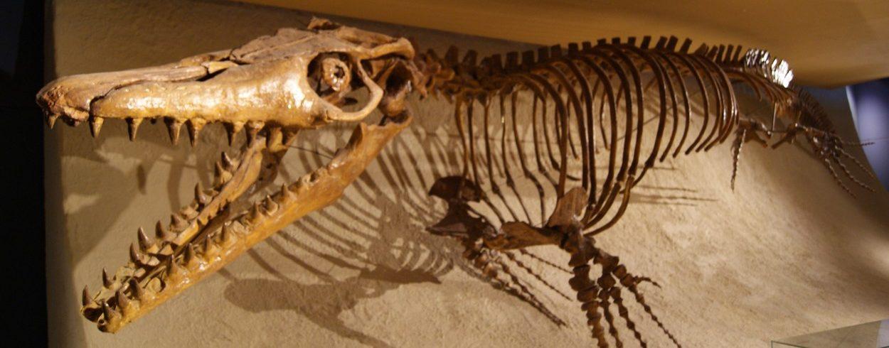 Foto: Natuurhistorisch Museum Maastricht